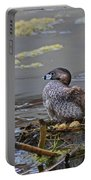 Pied-billed Grebe On Eggs Portable Battery Charger