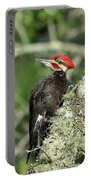 Pileated Perch Portable Battery Charger
