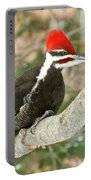 Pileated Woodpecker 6073 Portable Battery Charger