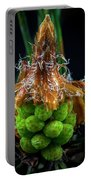 Pine Cone Focus Stack Portable Battery Charger