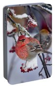 Pine Grosbeak Male Portable Battery Charger