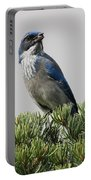 Pine Nut Delight Scrub Jay Portable Battery Charger