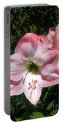 Pink Hippeastrum 02 Portable Battery Charger