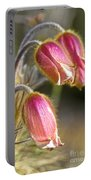 Pink Pasqueflower Portable Battery Charger