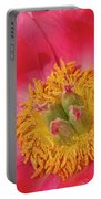 Pink Peony Flower Fine Art  Portable Battery Charger