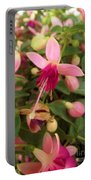 Pink Petalled Fuchsia Blooms              May         Indiana Portable Battery Charger