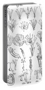 Plant Sexual Systems, Carl Linnaeus Portable Battery Charger
