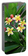 Plumeria Flowers 5 Portable Battery Charger