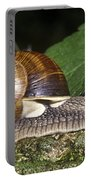 Pneumostome Of A Burgundy Snail Portable Battery Charger