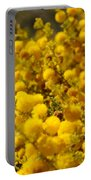 Pollen Portable Battery Charger