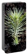 Ponderosa Pine 2 Portable Battery Charger