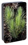 Ponderosa Pine 4 Portable Battery Charger
