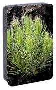 Ponderosa Pine 5 Portable Battery Charger