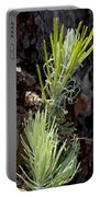 Ponderosa Pine 8 Portable Battery Charger