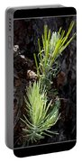 Ponderosa Pine Wide Portable Battery Charger