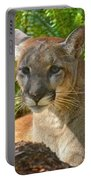 Portrait Of A Young Florida Panther Portable Battery Charger
