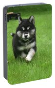 Precious Alusky Puppy Dog Running In A Yard Portable Battery Charger