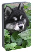 Precious Fluffy Alusky Puppy Dog In Green Foliage Portable Battery Charger