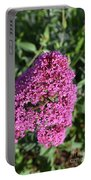 Pretty Blooming Pink Phlox Flowers In A Garden Portable Battery Charger