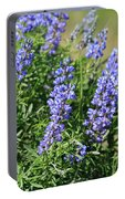 Pretty Blue Flowers Of Silky Lupine Portable Battery Charger