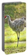 Primping Sandhill Crane Portable Battery Charger