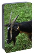 Profile Of A Pygmy Goat In A Farm Field Portable Battery Charger