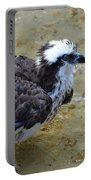 Profile Of An Osprey In Shallow Water Portable Battery Charger