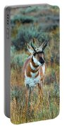 Pronghorn Antelope Amid Fall Foliage Wyoming Portable Battery Charger