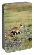 Pronghorn Doe With Her Twins Portable Battery Charger