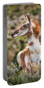 Pronghorn Mother Portable Battery Charger