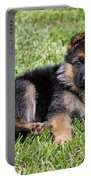 Puppy In The Spring Portable Battery Charger by Sandy Keeton