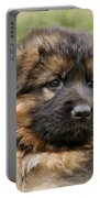 Puppy Portrait II Portable Battery Charger by Sandy Keeton