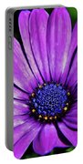 Purple African Daisy Portable Battery Charger