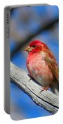 Purple Finch In Spring Portable Battery Charger
