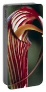 Purple Jack In Pulpit Portable Battery Charger