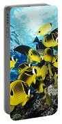 Raccoon Butterflyfish Portable Battery Charger