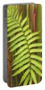 Rainbow Eucalyptus And Fern Portable Battery Charger