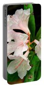 Rare Florida Beauty - Chapmans Rhododendron Portable Battery Charger