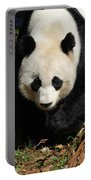 Really Sweet Giant Panda Bear Waddling Around Portable Battery Charger