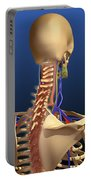 Rear View Of Human Spine And Scapula Portable Battery Charger