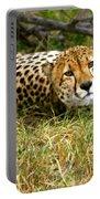 Reclining Cheetah Portable Battery Charger