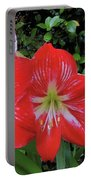 Red Amaryllis Trio Portable Battery Charger