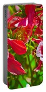 Red And White Columbine At Pilgrim Place In Claremont-california Portable Battery Charger