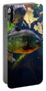 Red Bellied Piranha Or Red Piranha Portable Battery Charger