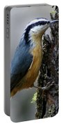 Red Breasted Nuthatch Portable Battery Charger
