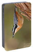 Red-breasted Nuthatch Upside Down Portable Battery Charger