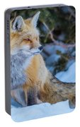 Red Fox At Dawn In Winter Portable Battery Charger