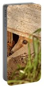 Red Fox Kit Peaking Out From Den Under Old Granary Portable Battery Charger