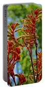 Red Kangaroo Paws At Pilgrim Place In Claremont-california- Portable Battery Charger