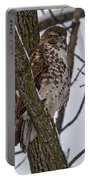 Red Shouldered Hawk - Madison - Wisconsin Portable Battery Charger